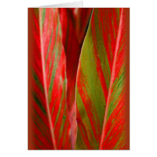"""Red and Green Ginger"" Card"