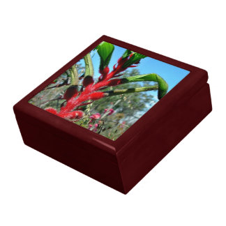 Red and green kangaroo paw flower large square gift box