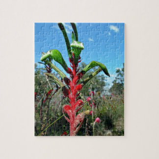 Red and green kangaroo paw flower jigsaw puzzles