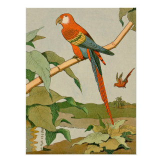 Red-and-Green Macaw Jungle Parrot Perfect Poster