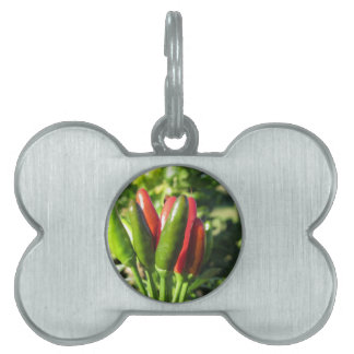 Red and green peppers hanging on the plant pet name tag