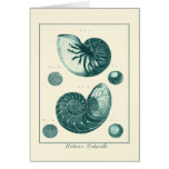 Red and Green Seashell Art Greeting Card