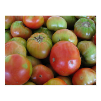 Red and Green Tomatoes Postcard