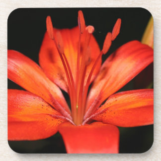 Red and Orange Asiatic Lily Closeup Coasters
