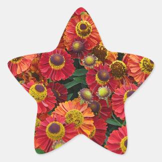 Red and orange helenium flowers star sticker