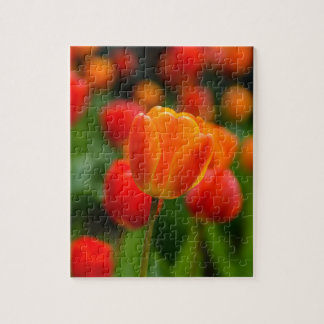 Red and Orange Tulips in the Garden Jigsaw Puzzle