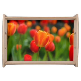 Red and Orange Tulips in the Garden Serving Tray