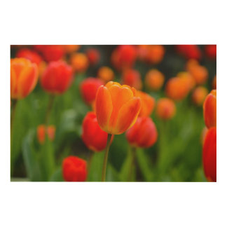 Red and Orange Tulips in the Garden Wood Wall Decor