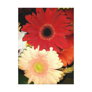 Red and Peach Gerbera Daisy Canvas Print
