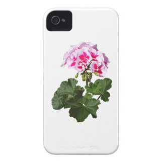 Red And Pink Geranium iPhone 4 Cover
