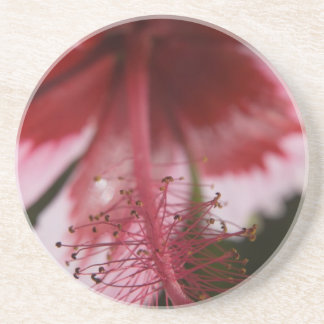 Red and Pink Hawaiian Hibiscus Beverage Coaster