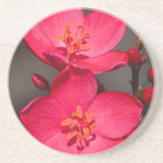 Red and Pink Tropical Fiji Flowers Drink Coaster