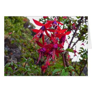 Red and purple Fuchsia Magellanica Card