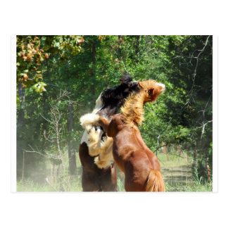 Red and Tango at Play Postcard