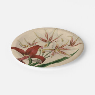 Red and White Amaryllis Flower Paper Plate