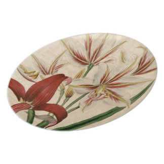Red and White Amaryllis Flower Plate