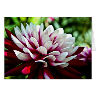 Red and White Dahlia flower Card