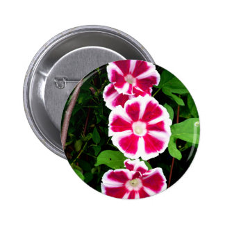 Red and White Morning Glories Buttons