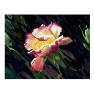 Red and white rose and buds, incandescent water gl postcards