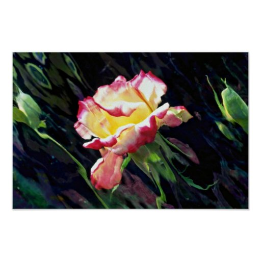 Red and white rose and buds, incandescent water gl poster