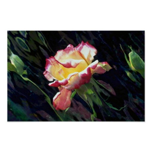 Red and white rose and buds, incandescent water gl print