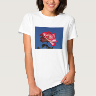 Red and White Rose Tshirts