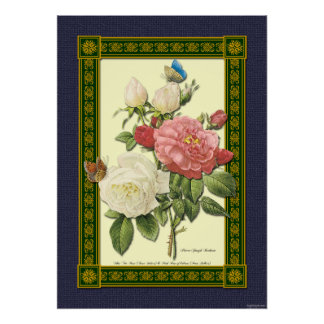 Red and White Roses Botanical Poster