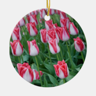 Red and White Tulips Ornaments
