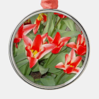 red and white tulips Silver-Colored round decoration