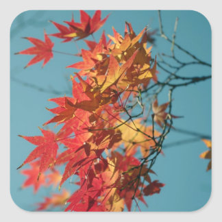 Red and yellow autumn leaves on a blue background square sticker