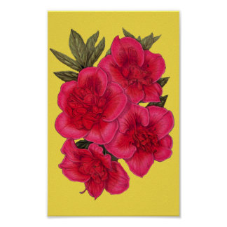 Red And Yellow Azalea Flower Poster