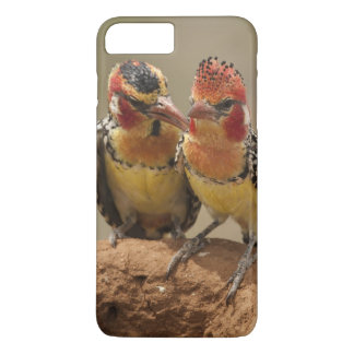 Red and Yellow Barbet eating termites iPhone 7 Plus Case