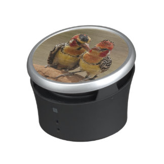 Red and Yellow Barbet eating termites Speaker