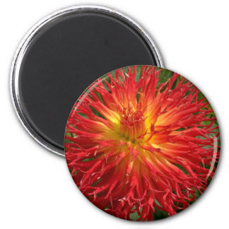 Red And Yellow Crazy Dahlia Multiple Items 6 Cm Round Magnet