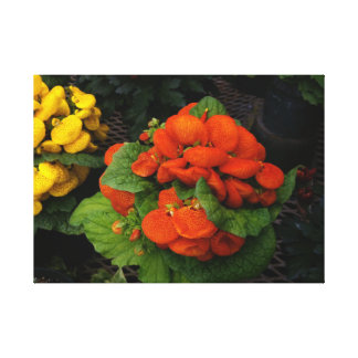 Red and yellow flower photo on stretched canvas