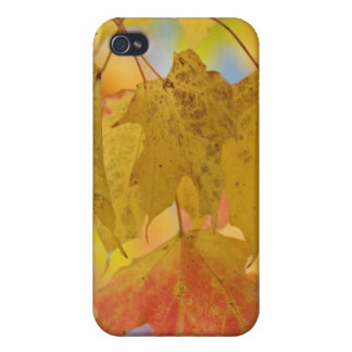 Red and yellow maple leaves, in the southern iPhone 4/4S cases