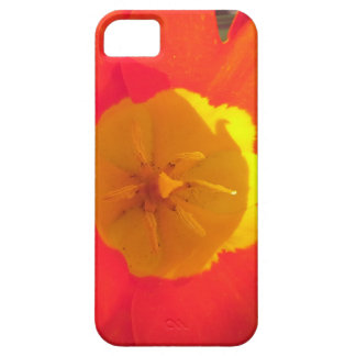 Red and yellow open tulip flower iPhone 5 cover