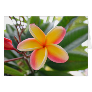 Red and Yellow Plumeria 1 Card
