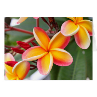 Red and Yellow Plumeria 3 Card