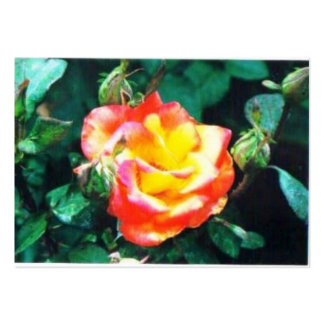red and yellow rose business card
