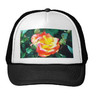red and yellow rose cap
