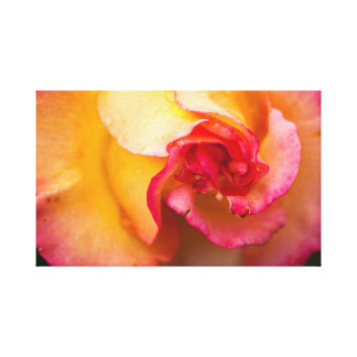 Red and yellow rose flower canvas print