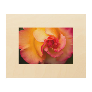 Red and yellow rose flower wood canvases