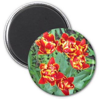 Red and Yellow Tulip 6 Cm Round Magnet
