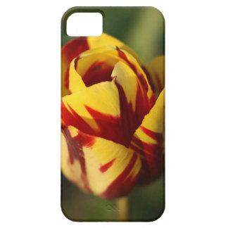 Red and Yellow Tulip Flower iPhone 5 Cover