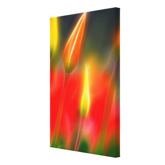 Red and Yellow Tulip Glow Canvas Print