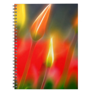 Red and Yellow Tulip Glow Notebook