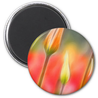 Red and Yellow Tulip Sketch Magnet