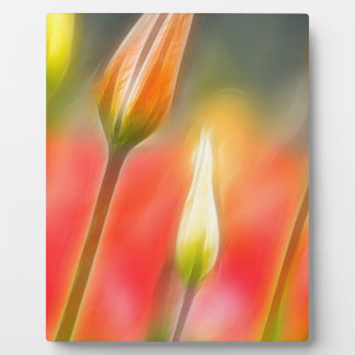 Red and Yellow Tulip Sketch Plaque