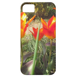 Red and Yellow Tulips Case For The iPhone 5